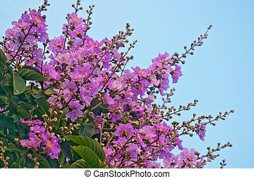 Crape myrtle flowers - Blue sky, red flowers and green...