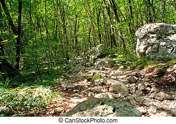 Forest, Slovenian Julian Alps - View of the Forest in the...
