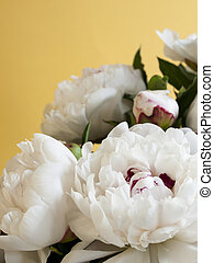 White Peonies - Peony or paeony have compound, deeply lobed...