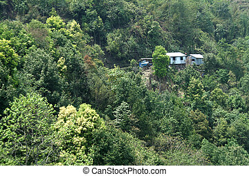 Forest Homes - Residing in the midst of lush green forest