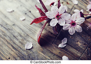 Spring Blossom - Spring blossom on rustic wooden plank