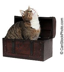 inquisitive cat in treasure chest