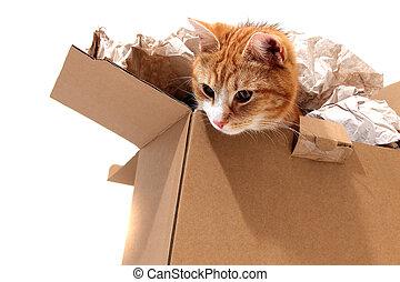 貓, 移動, 箱子