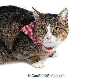 甜, 花色絲質大手帕, 貓