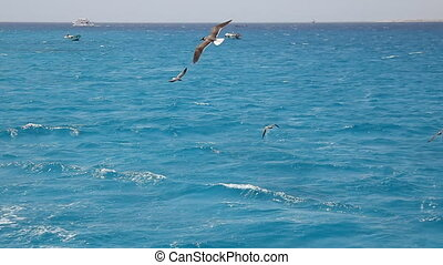 gulls flying - Gulls fly over Red Sea