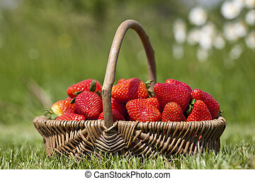 Strawberry in a basket on a grass