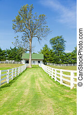 Horse farm - Scenic image of a horse farm with white wooden...