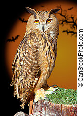 Bubo bubo eagle owl night bird in halloween bat orange...