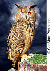 Bubo bubo eagle owl night bird full moon - Bubo bubo eagle...
