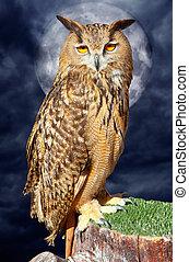 Bubo bubo eagle owl night bird full moon - Bubo bubo eagle...