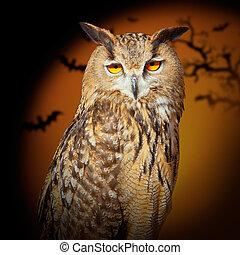 Bubo bubo eagle owl night bird in halloween bat orange...