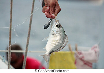 Hands of a fisherman with fish