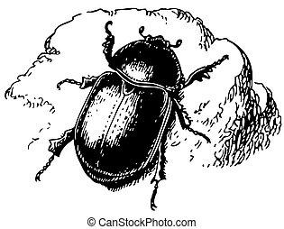 Beetle Pentodon idiota on the rock
