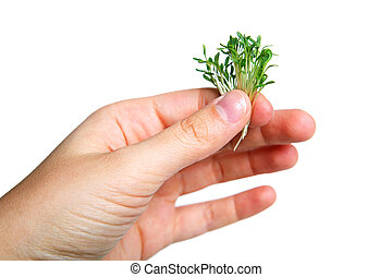 Watercress - A woman's hand holding some watercress sprouts.