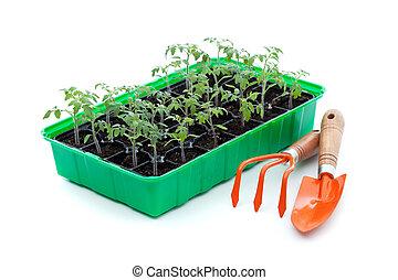 Seedlings and gardening utensils