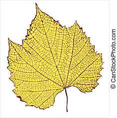 Graphic drawing of leaf structure