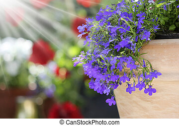 sunny garden flower arrangement