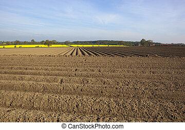 arable fieldscape