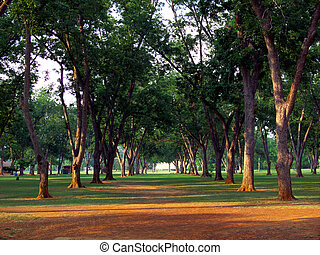 Line of trees - The trees In Pecan Park in NacogdochesTexas...