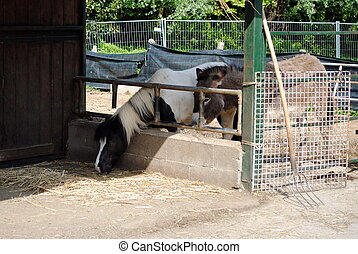 horse and mule in a cowshed, concept of captivity