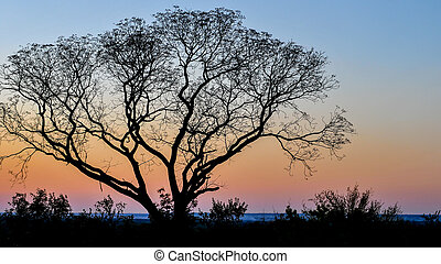 Sunset in Victoria Falls National Park, Zambia - Lone tree...