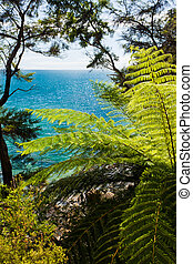 Subtropical forest of Abel Tasman NP, New Zealand - Lush...