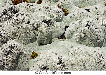 Close up of lichens commonly called rock moss - Close up of...