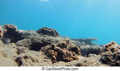 Underwater WorldBay of Bengal