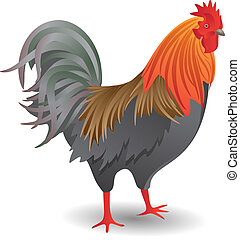 The Cock - Vector illustration of the good-looking motley...
