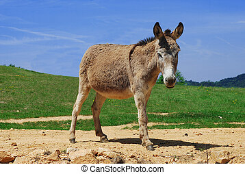 donkey in the countryside