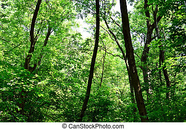 Beautiful green forest background
