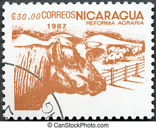 NICARAGUA - 1987: shows image of agrarian reform, Cattle -...