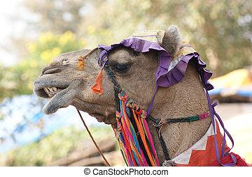 adorned camel portrait