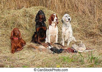 Successful bird shoot - Four gun dog resting after the hunt...