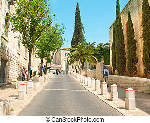 Ancient street in Nazareth, Israel Date palm trees