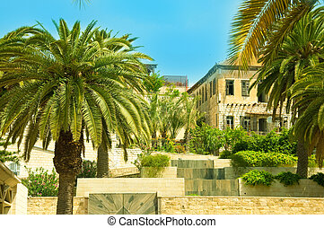 Ancient street in Nazareth, Israel. Date palm trees
