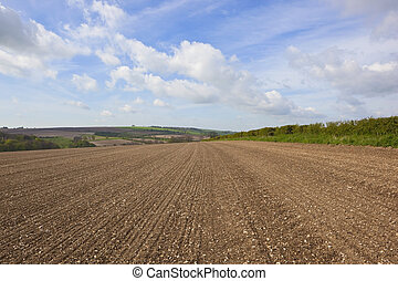 chalky rural fieldscape - an agricultural landscape with...
