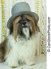 Shih Tzu in a Silver Top Hat