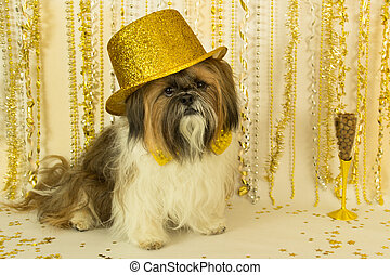 Party Dog in a Gold Hat