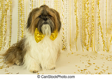 Party Dog in a Gold Bow Tie