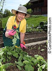Senior woman gardening - Retired older woman picking...