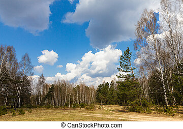 Forest crossroad expensive about a glade in the spring sunny day under the dark blue sky with big white clouds