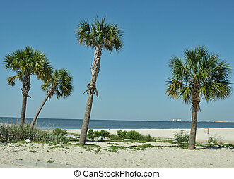 Palm Trees - Palm trees in the sand at the edge of the Gulf...