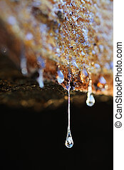 Drops of resin fall from a trunk in a pile of chopped wood
