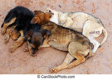Young street dogs huddling together and sleeping - Three...