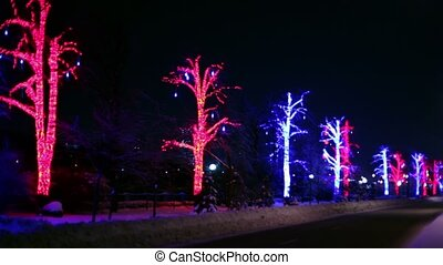 Trees are decorated with garlands stand along the road on...