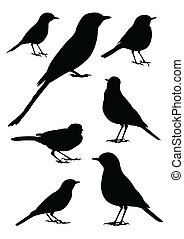 Birds Silhouette - vector