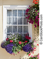 Window Box and Hanging-Basket - A vibrant profusion of...