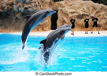 Dolphin playing with people in the pool at a water park