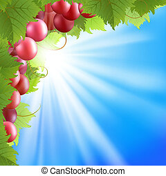 Background with vine - Summer background with blue sky and...